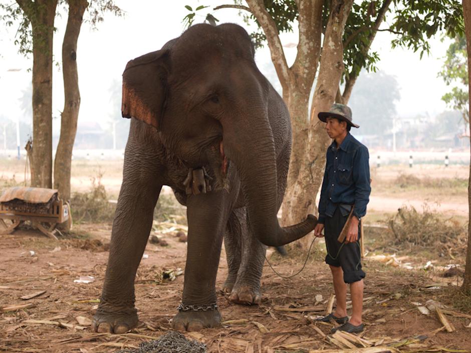 Sayaboury Elephant Festival, Laos