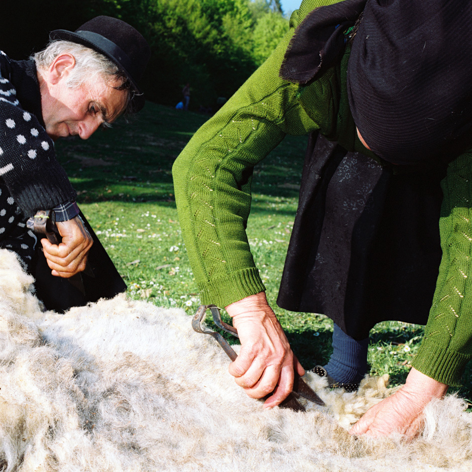 Romania - Carpathian mountains - Elderly Romanian peasant farmers hand shear a sheep in Maramures